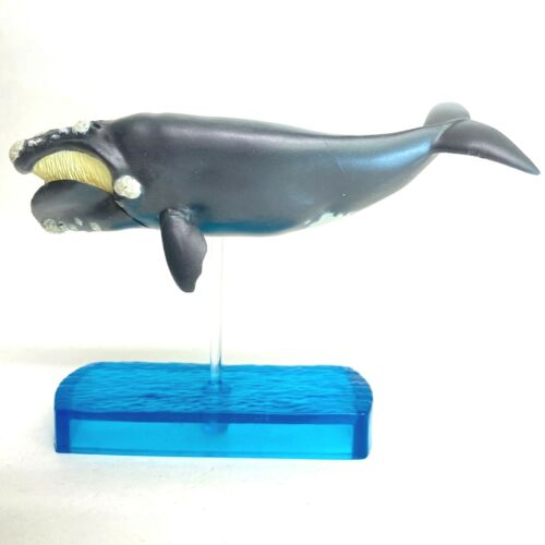 Colorata Marine Mammals DX Figure Right Whale import Japan