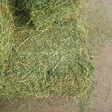 Lucerne hay prime heavy bales be quick!! Armidale City Preview