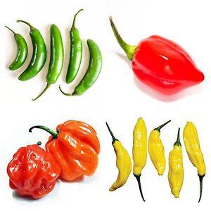 40 X Chilli Pepper Seeds - Scotch Bonnet, Serrano, Habanero & Lemon Drop