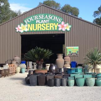 Four Seasons - Plants and Garden Decor - Pots - Plants - Palms Wanneroo Wanneroo Area Preview