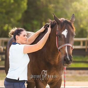 Equalize Equine Therapy Maroochydore Maroochydore Area Preview