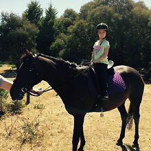 Bay thoroughbred mare for sale $2500 or free lease Moriac Surf Coast Preview