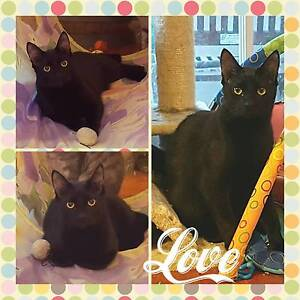 Young cat needing a forever home Picton Wollondilly Area Preview
