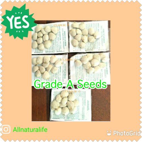 5 PACKS Nuez de la India Original 60 Seed Grade A Best Quality Weight Loss