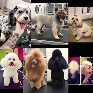 Dog grooming Runcorn Brisbane South West Preview