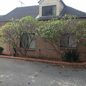 Room for rent in stmarys 180$ a week St Marys Penrith Area Preview