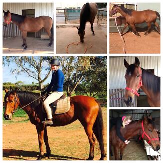 Thoroughbred mare for sale Evanston South Gawler Area Preview
