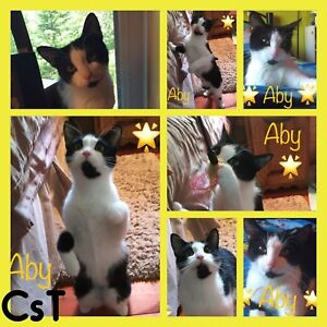 Aby chatte 2 ans