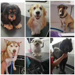 Dog grooming trailer in new south wales gumtree australia free dog grooming trailer in new south wales gumtree australia free local classifieds solutioingenieria Choice Image