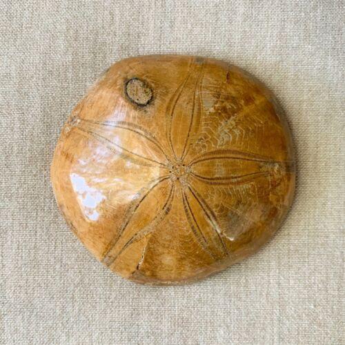 Fossilized Sand Dollar Jurassic Age Sea Urchin Fossil Specimen Madagascar