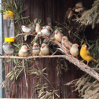 BIRD ADOPTER (BIRDIE HEAVEN) Greenwood Joondalup Area Preview