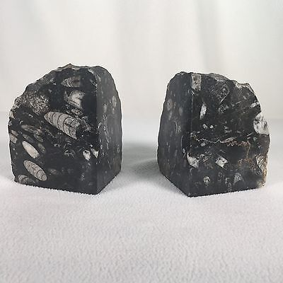 """Stone Fossil Bookends Polished Made In Morocco Approx 5"""" Tall approx 4lbs each"""