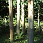 Gum Tree Grotto