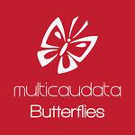MULTICAUDATA BUTTERFLIES