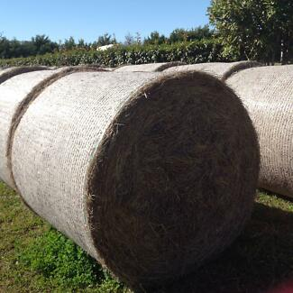 Round Bales of Rhodes Grass Hay for Sale Cambooya Toowoomba Surrounds Preview
