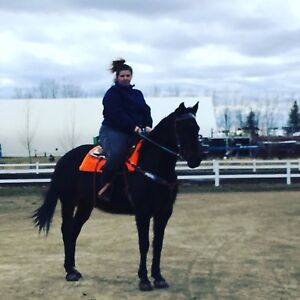 Warmblood Mare for part lease