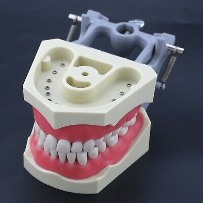 Columbia Dentoform Fit 32 Teeth Dental Typodont Licensing Exam Model Cdca M8030