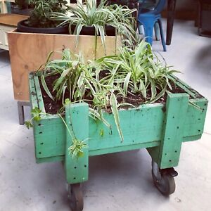 Planter box and plant Sunshine North Brimbank Area Preview