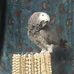 Grey Bird Vintage
