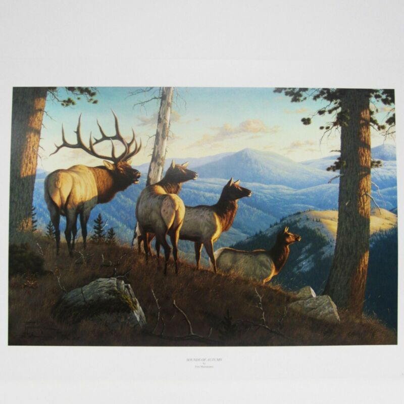 Sounds of Autumn By Tom Manasanerz Elk Wildlife 5x7