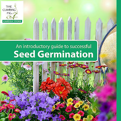 Explore our short introductory, seed germination guide.