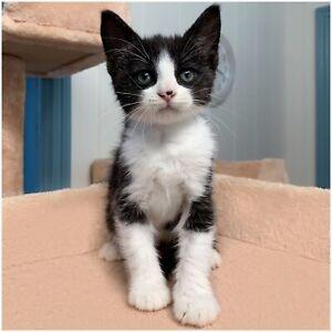 Rescue Kittens Need Homes! EATONS HILL VET