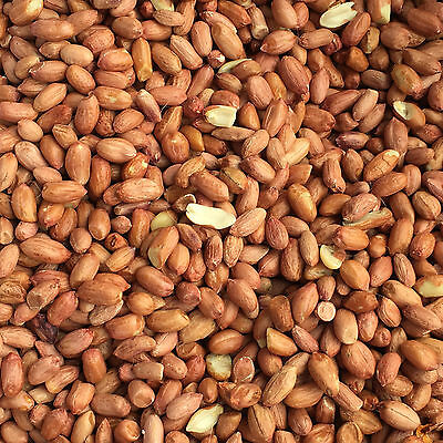 25Kg Peanuts Premium Wild Bird Food, High Oil, Nutritious, Tested and Safe Feed