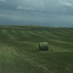 Looking for 100 bales