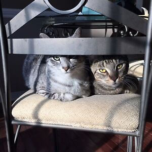 Two wonderful cats!
