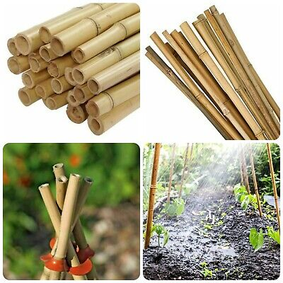 100 x 5FT Heavy Duty Strong Bamboo Garden Canes Plant Support Pole Thick Quality
