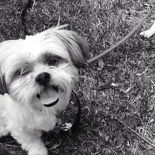 Pet sitter Needed Mitcham Whitehorse Area Preview