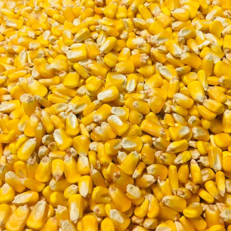 Whole Corn Animal Wildlife Feed Arts & Crafts