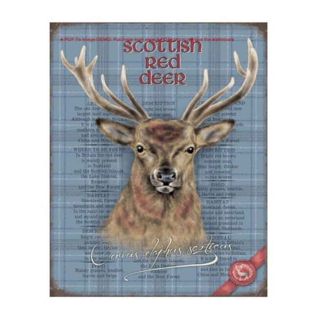 Vintage Style Reproduction Scottish Red Deer Metal Wall Sign 40 cm x 30 cm 10270