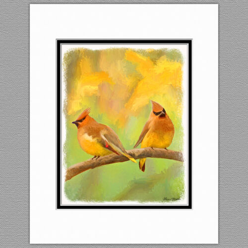 Cedar Waxwing Wild Bird Original Art Print 8x10 Matted to 11x14