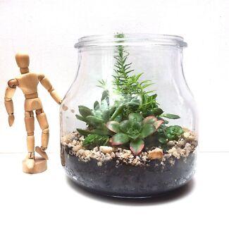 NEW Glass Indoor Garden Terrarium with Mixed Succulent Plant Varieties