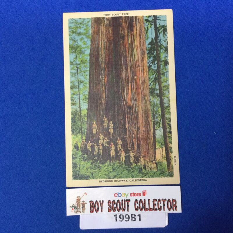 Boy Scout Vintage Post Card The Boy Scout Tree California