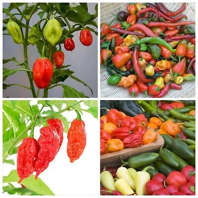 50+ Super Hot Pepper Mix Seed Many Varieties Ghost, habanero pepper many other -