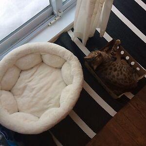 Coussin pour chat/chien