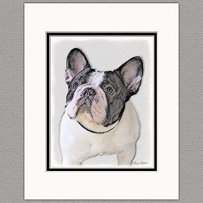 (French Bulldog Frenchie Brindle Pied Original Art Print 8x10 Matted to 11x14)