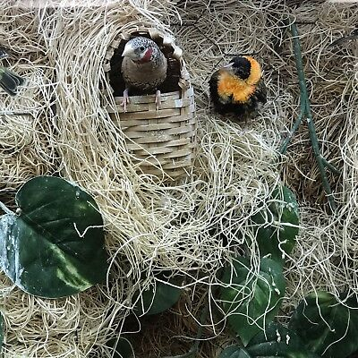 Excelsior Moss (Aspen), Natural, Bulk 7oz Bag Finch Nesting Material Fruit Fly