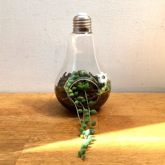New Hangable Glass Lightbulb Terrarium W String Of Pearls Indoor