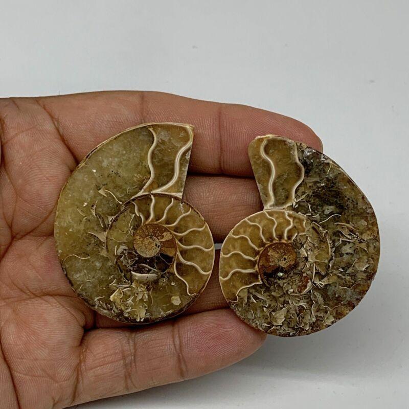 "28.8g, 2""x1.5""x0.3"", 1 Pair Half Cut Ammonite Polished Mineral @Madagascar,F2216"