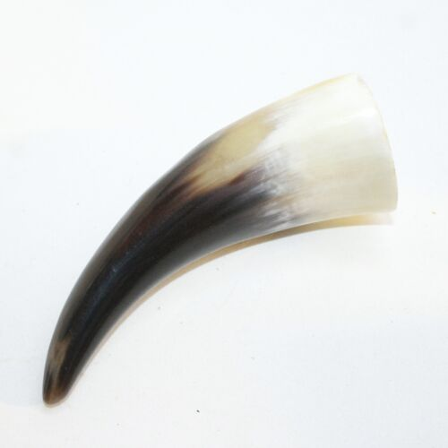 1 Polished Cow Horn Tip #4018 Natural Colored