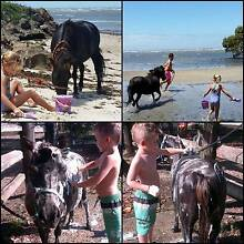 Kids Pony - Swap or Sell Woodford Moreton Area Preview
