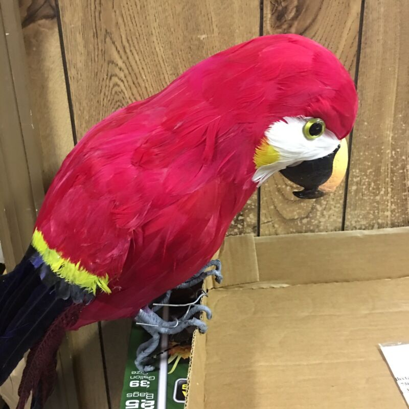 "26"" Life Size Red Feather Macaw Parrot Unbranded Great For Parrot Heads"