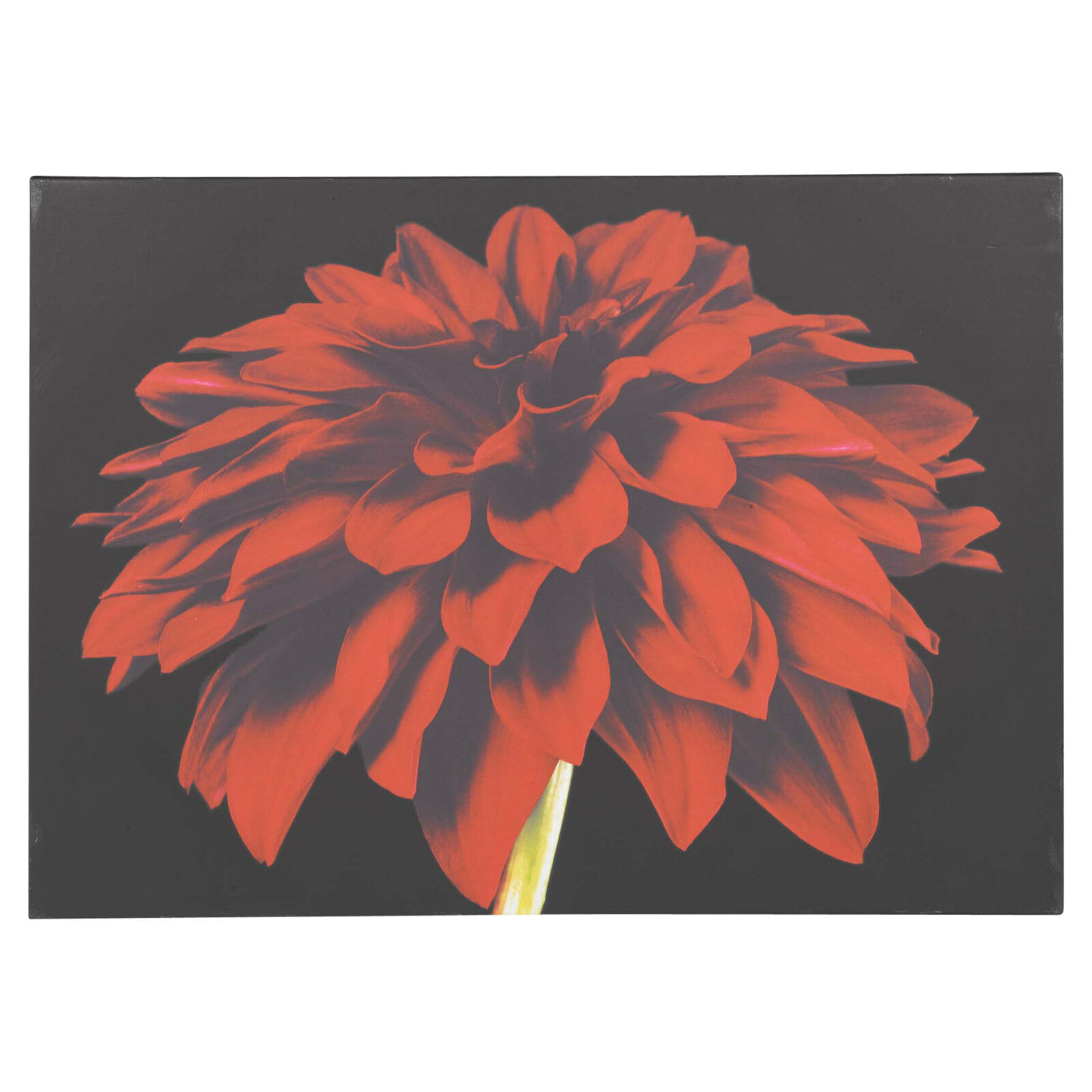 Wall Canvas Red Dahlia Home Decoration Large 70 x 49.5cm Print Picture Panel Art