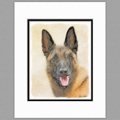 Belgian Malinois Dog Original Art Print 8x10 Matted to 11x14