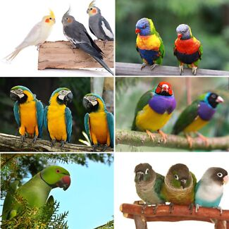 Wanted: We take in unwanted Birds & Parrots