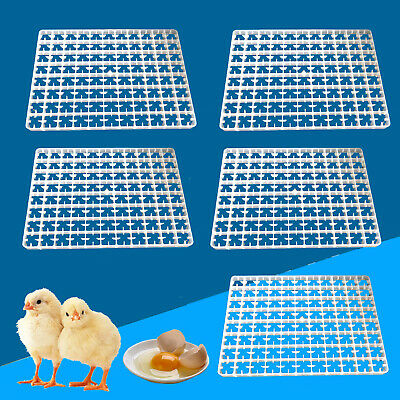 88 Eggs Capacity Rite Farm Products Chicken Egg Tray For Our Cabinet Incubators