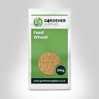 20kg Feed Wheat Poultry Corn Wheat For Chickens Duck Geese Feed